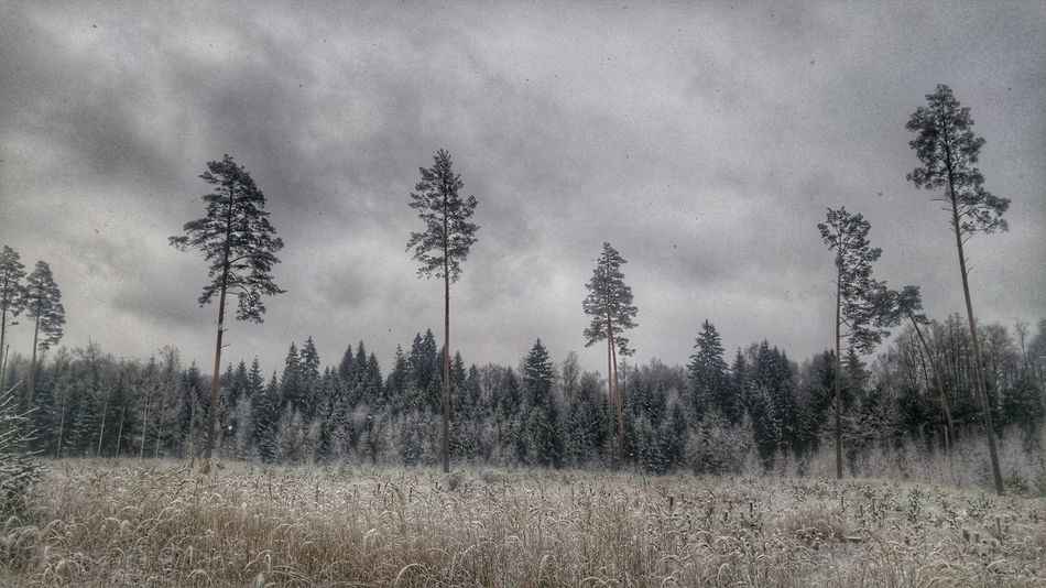 Forest Winter Snow Iecava Baldone Cold LGG4 Lgg4photography
