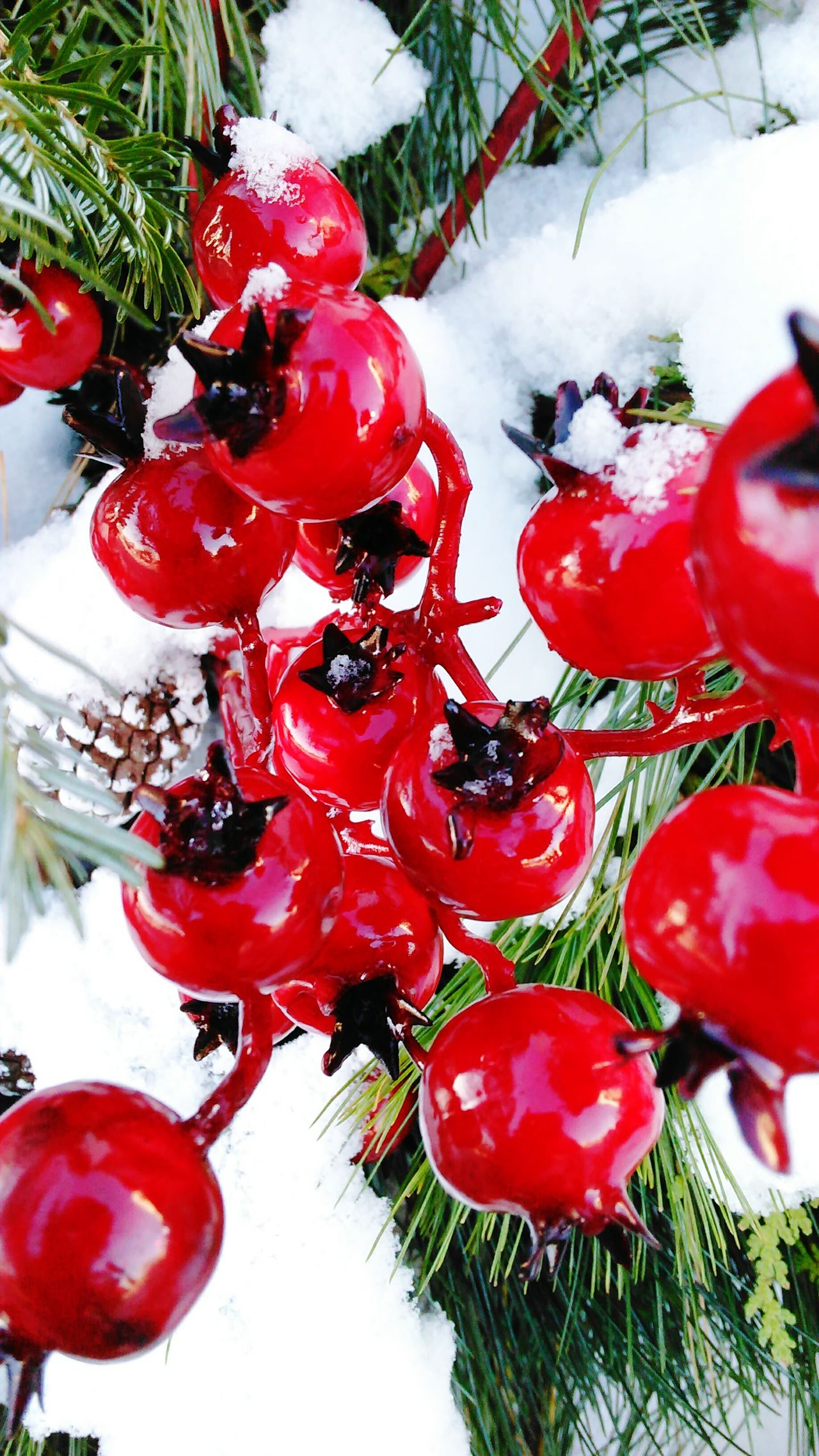 Red Tree Close-up Christmas Winter Christmas Decoration No People Fruit Celebration Cold Temperature Christmas Ornament Snow Day Christmas Tree Outdoors Nature Rowanberry Freshness Beauty Absolutely Incredible Enjoying Life Amazing EyeEm Gallery Best EyeEm Shot Lovelovelove