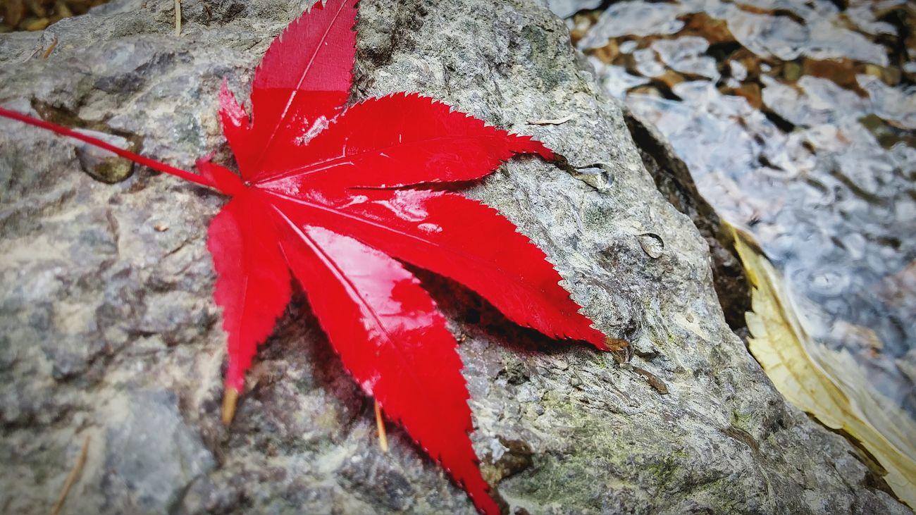 단풍 낙엽