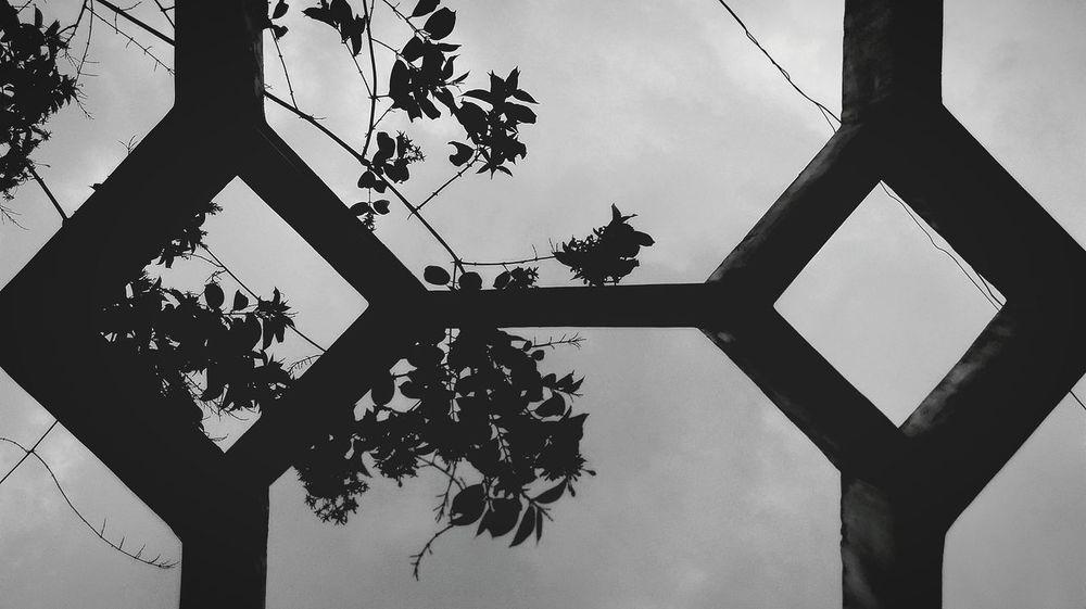 Black & White Mysecretgarden Sky Outdoors Open Edit My Best Photo 2015