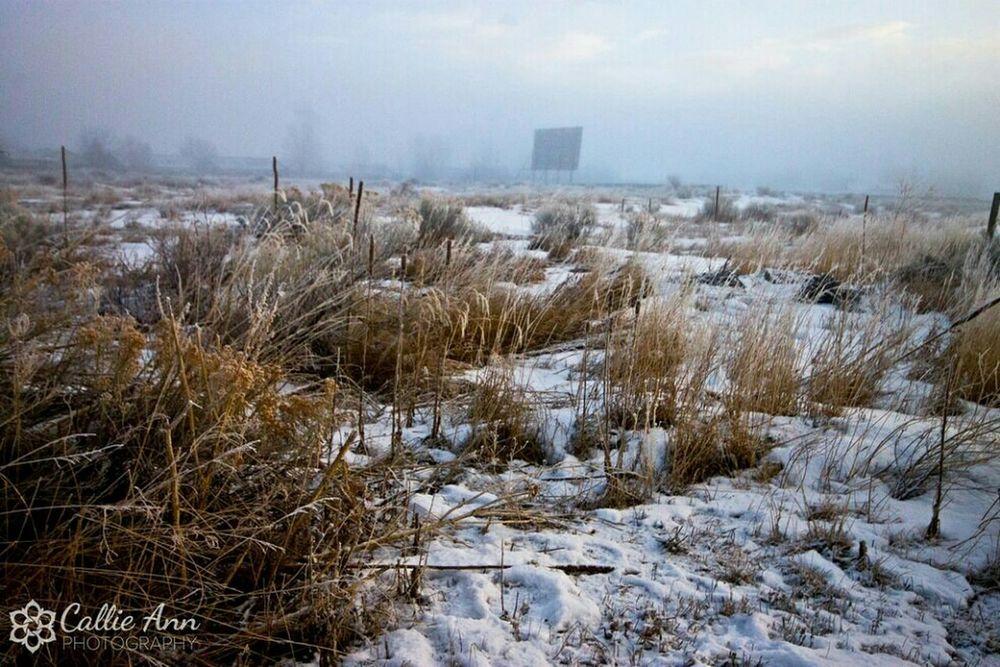 The Drivein in Winter. Fortcollins Colorado Nature Photography EyeEm Best Shots OpenEdit EyeEmBestPics 365photoproject