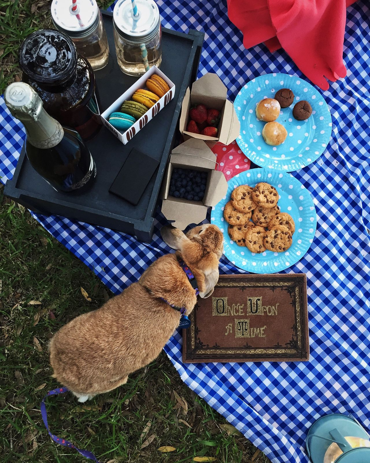 Beautiful stock photos of easter bunny, Animal Themes, Australia, Bottle, Bunny