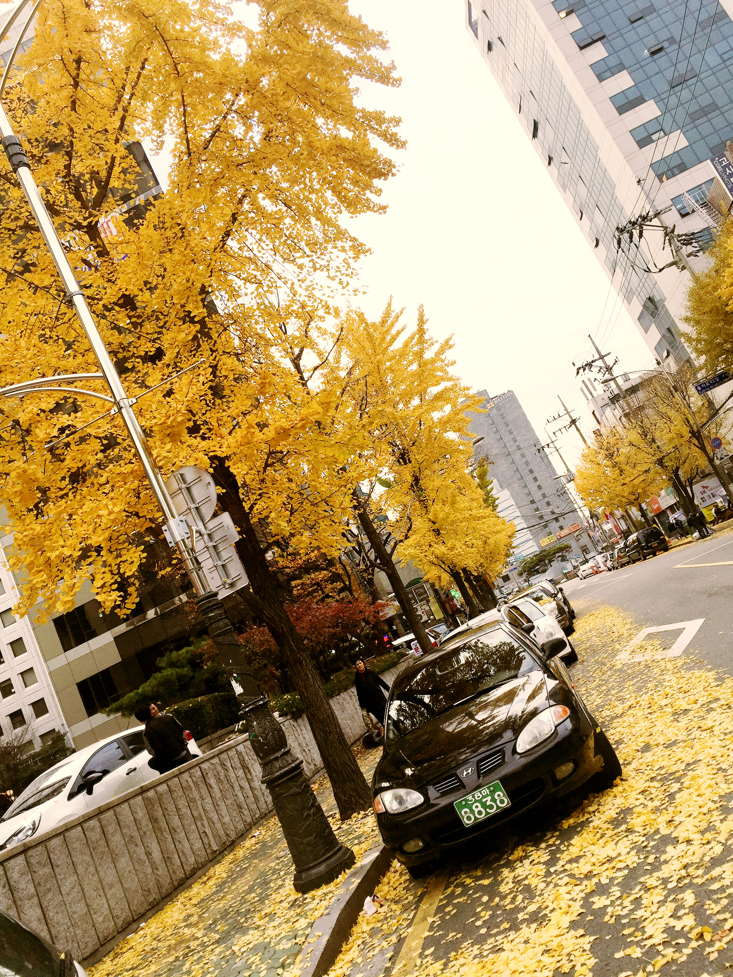 building exterior, architecture, built structure, city, tree, street, high angle view, autumn, building, day, season, car, residential building, outdoors, road, yellow, land vehicle, sunlight, no people, residential structure