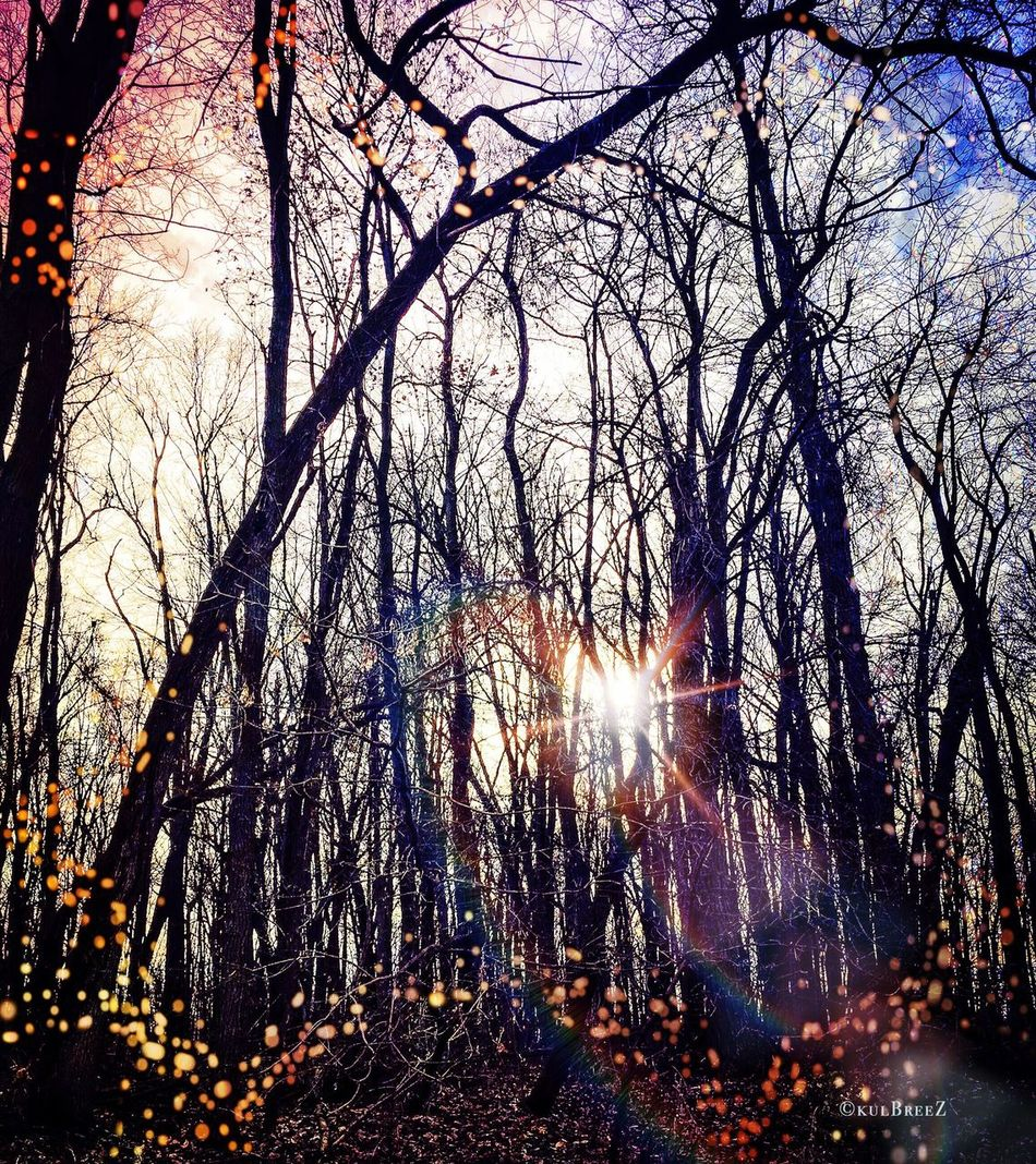 """Showcase: December """"Fairy-ville"""" Father Sky Poetic Imagery EyeEm Nature Lover Patterns In Nature Tree_magic The Woods December Sparkle Changing Seasons"""