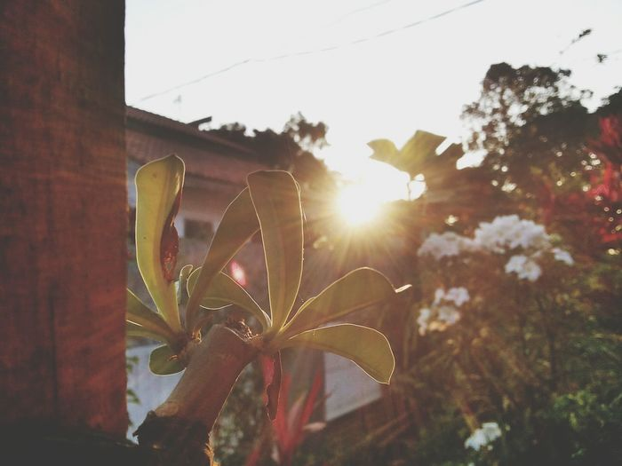 Beautiful Sunset HomeSweetHome🏠