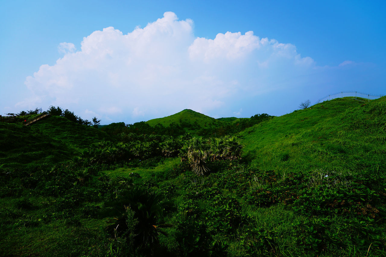nature, beauty in nature, tranquility, tranquil scene, scenics, landscape, sky, no people, cloud - sky, outdoors, day, growth, mountain, tree