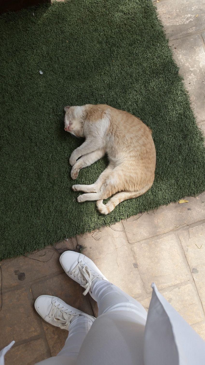 EyeEmNewHere Cat♡ Sleeping Scohol Medicine💖