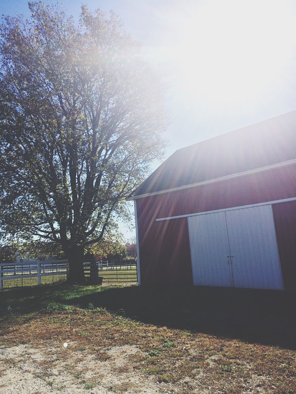 Barn By Tree On Field During Sunny Day