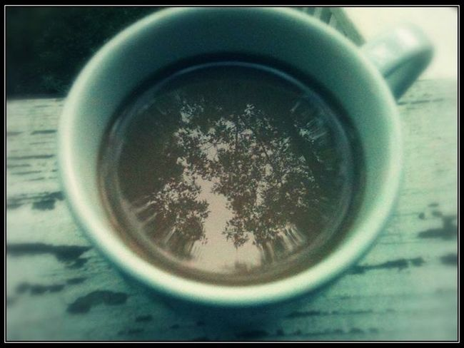 Trees in coffee Tres, Reflection, Coffee, Cup, Trees
