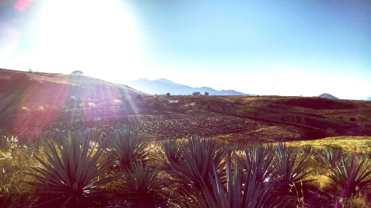 Paisaje De Tequila Jal, México First Eyeem Photo