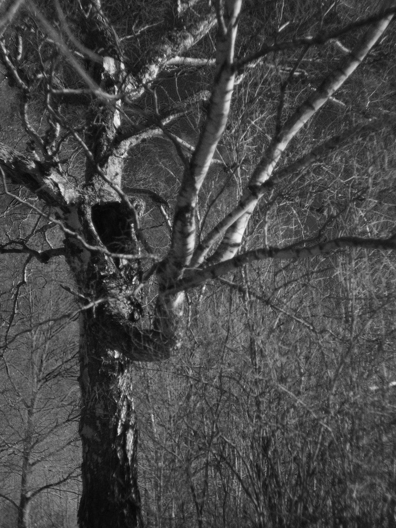 Think I will call this 'Call of Cthulhu' 😬😋 Tree Nature Branch No People Bare Tree Leaf Outdoors Forest Day Close-up Beauty In Nature Shallow Depth Of Field Blackandwhite Black & White Black And White Monochrome Monochrome Photography Nature Tree Trunk Tree Winter