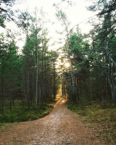 Follow The Path Woods Forest Trees Kolka Sunlight December Winter Followthepath Interesting Majestic Feels Sunday 2015  Latvia