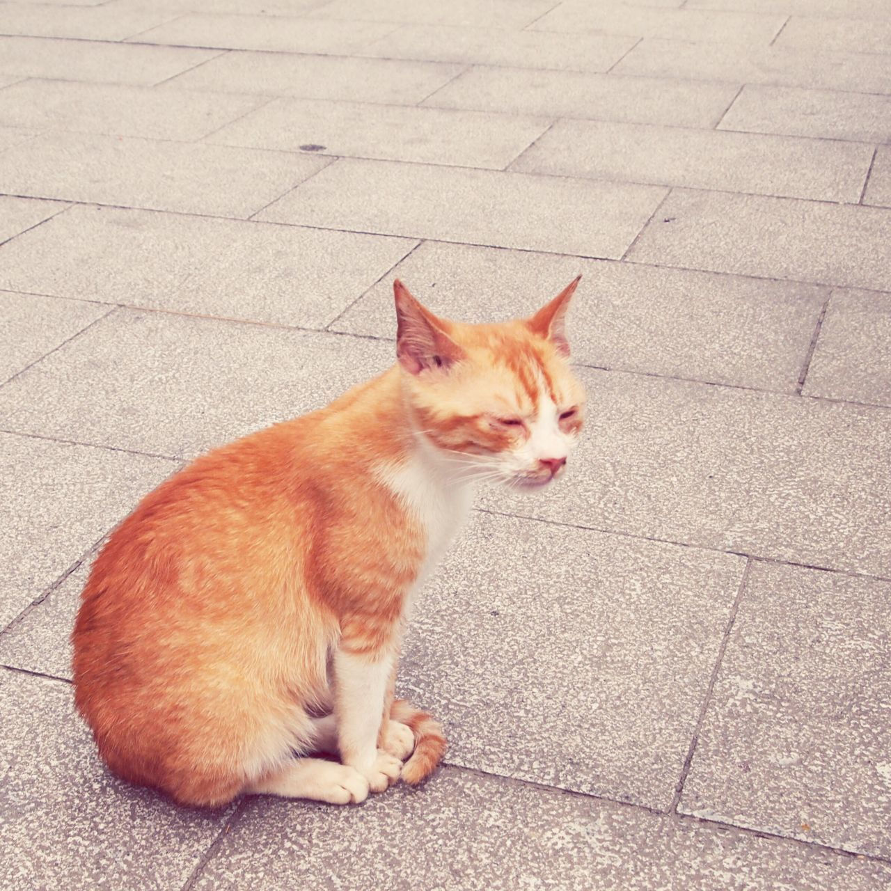 Don't you dare fall asleep when I lecture you!! Pets Domestic Cat Domestic Animals Animal Themes One Animal Mammal Feline Cat Lying Down No People Full Length Ginger Cat Outdoors Day Street Cat Street Cats Close-up Lifestyles Taipei Taipei,Taiwan
