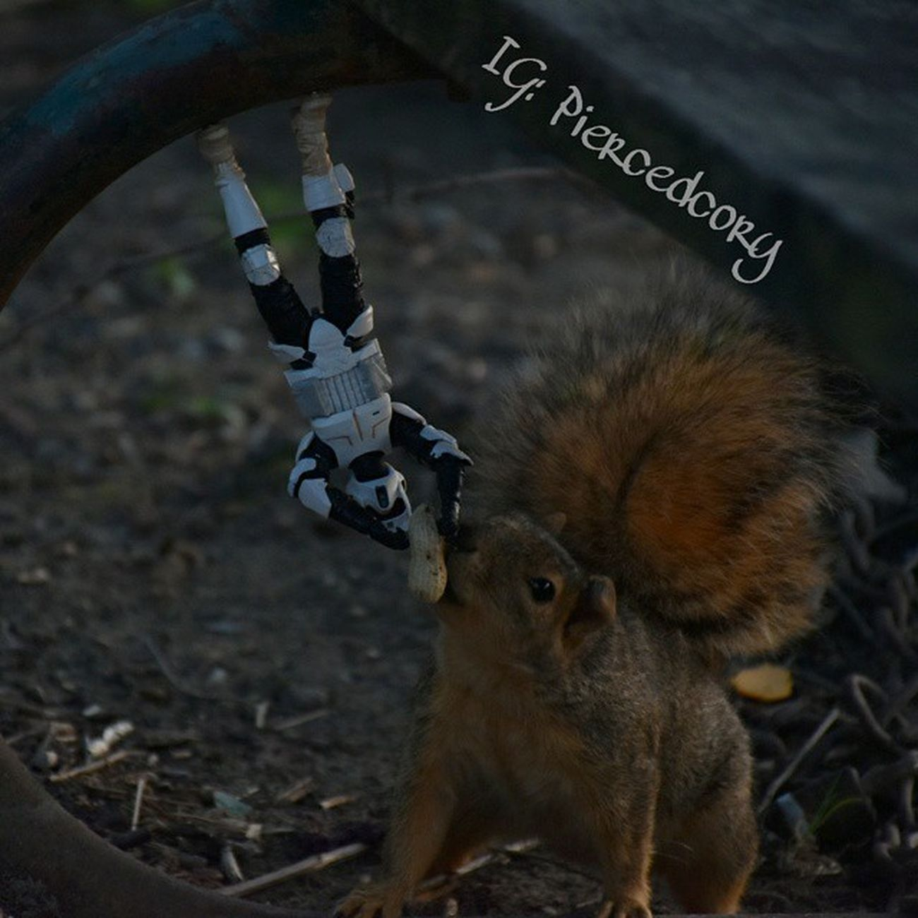 Eat your heart out spiderman! Funwiththesquirrels Scouttrooper Trooper_life