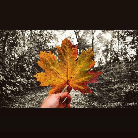 AspiringPhotographer Nikon_photography Nikonshots Nikonphotography Nikontop Instagood Autumn Leaves Leaf Fall Nature Blackandwhite Contrast Longisland Islandstrong Exploreliny Beauty Serenity Photography Colorful Fallinnewyork Newyork