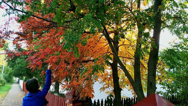Autumn Nature Orange Color Beauty In Nature Season  First Eyeem Photo