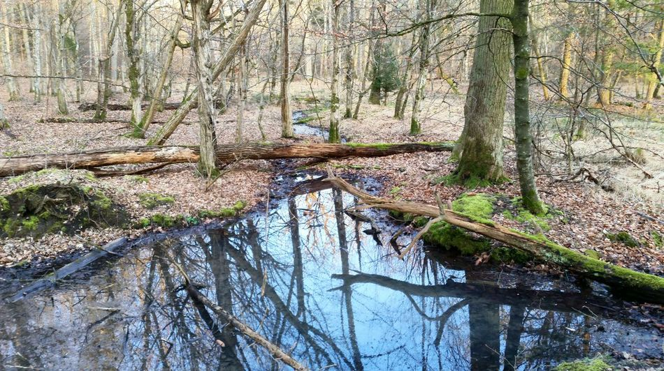 Nature And Stuff First Eyeem Photo Forest Nature Pond Biotope