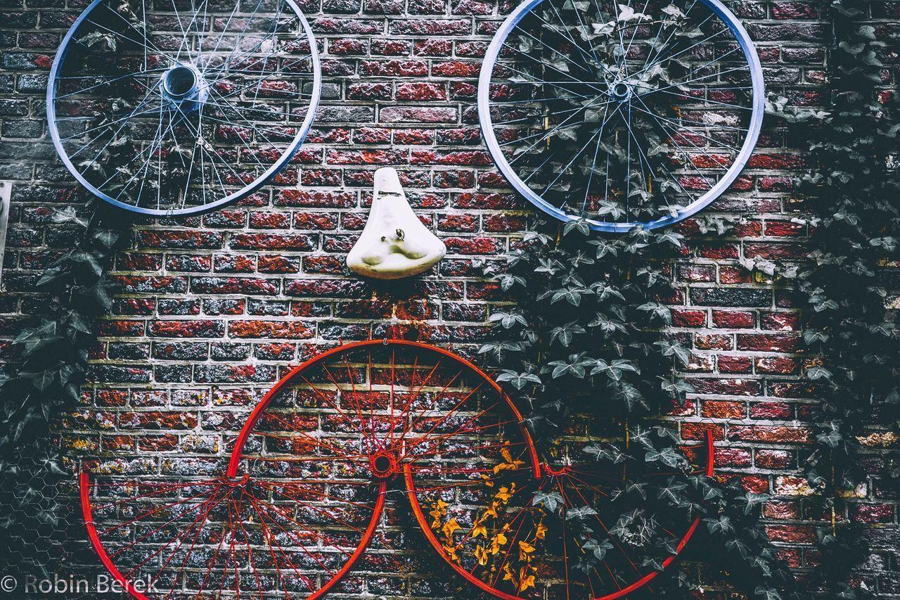Bicycle No People Wheel Outdoors Red Hanging Day Bird Animal Themes Close-up Amsterdam Sonyalpha Sonyalpha7ii The Street Photographer - 2017 EyeEm Awards EyeEmNewHere