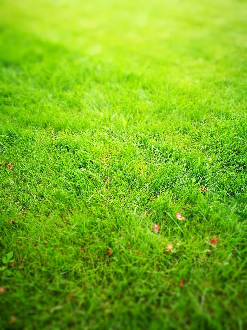 Green Color Full Frame Grass Backgrounds Growth Nature Green Freshness Day Plant Fragility Tranquility Beauty In Nature Grassy Outdoors Lush Foliage Tranquil Scene No People Trawa