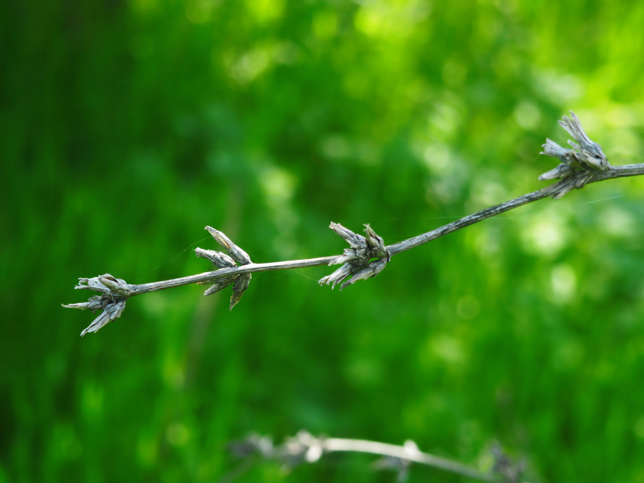 A tree branch on a green background. Grey and Green. Beauty In Nature Defocused Day Summer Outdoors Uncultivated Close-up Selective Focus No People Focus On Foreground Plant Nature Herbal Sunyday Flowers, Nature And Beauty Branches No Leaves Nature_collection Forest Photography Background