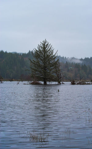 Beauty In Nature Cold Days Cold Temperature Global Warming Deluge Flooded Flooding Lake Nature No People Outdoors Pacific Northwest  Natural Disaster Scenics Tranquility Tranquility Tree Tree Tree And Sky Trees Water Wet Wetland Wetlands