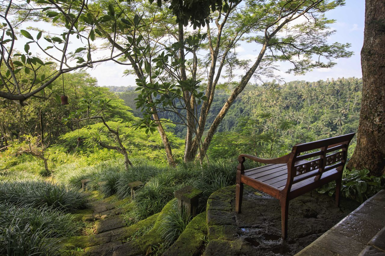 Morning in a jungle Bali Beauty In Nature Bench Chair Day EyeEm Nature Lover Growth INDONESIA Indonesia_photography Jungle Morning Nature No People Outdoor Chair Outdoors Relaxation Scenics Sea Shambhala Sky Table Tranquility Tree Ubud Water