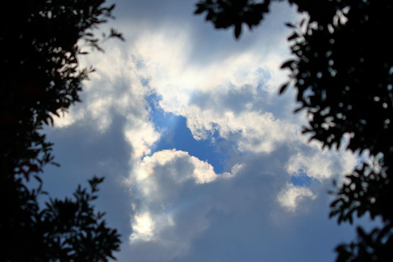 空に穴が・・・ Beauty In Nature Cloud - Sky Day Growth Low Angle View Nature No People Outdoors Scenics Sky Tranquility Tree 空