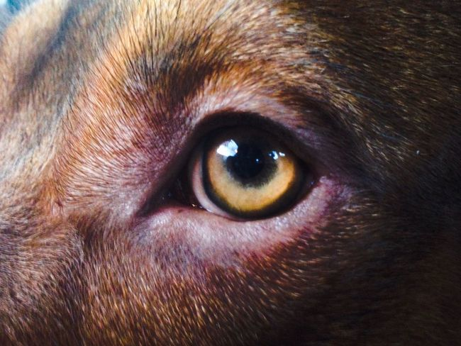 You Name It One Animal Animal Themes Pets Domestic Animals Dog Close-up Animal Head  Portrait No People Looking At Camera Indoors  Day Eyeball