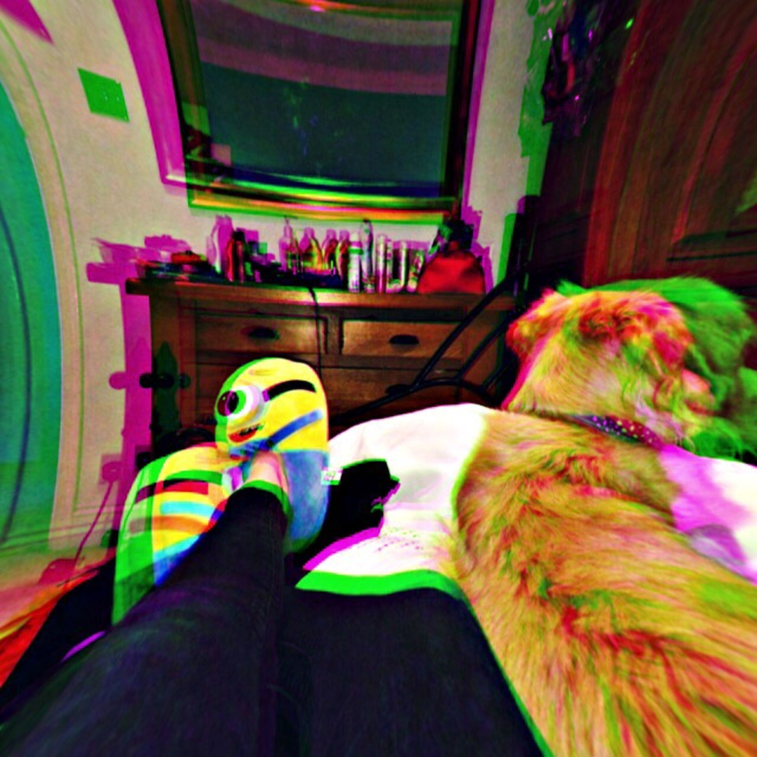 low section, indoors, one animal, person, multi colored, personal perspective, animal themes, pets, part of, domestic animals, relaxation, close-up, day, unrecognizable person, cropped, human foot, colorful