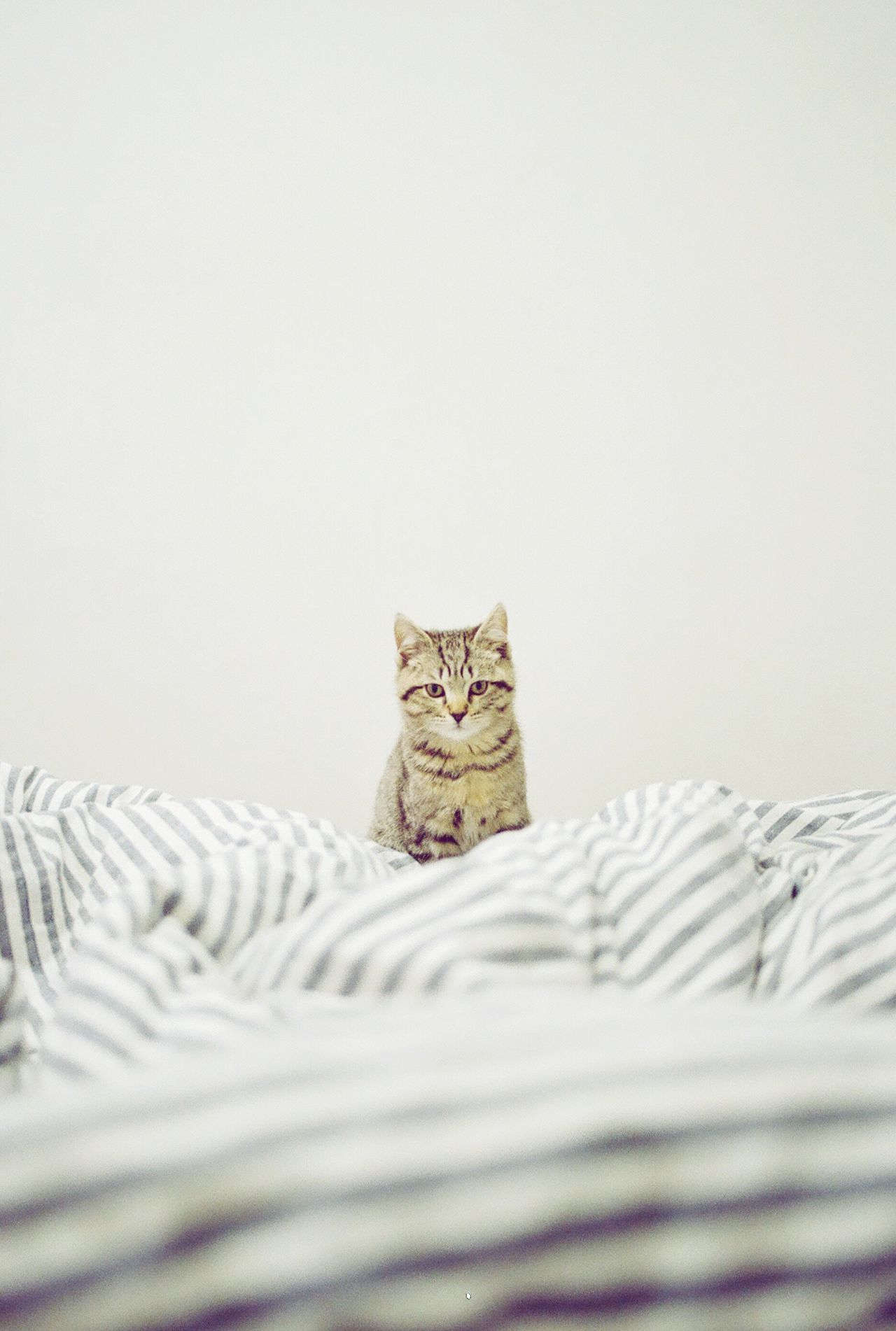 Film Photography Analogue Photography Portrait Cat Cute At Home Blanket Stripes Pattern Pets Bed No People Indoors  White Background Eye Contact Day Bedroom