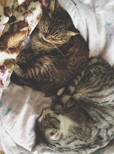 Кошки Cat
