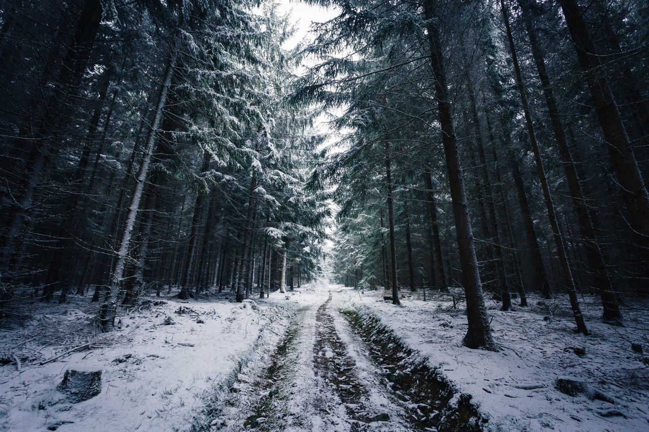 Beautiful stock photos of germany, Horizontal Image, bare tree, beauty in nature, cold temperature