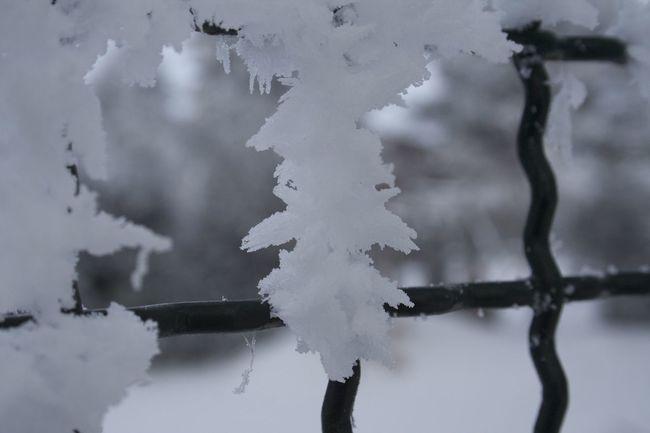 Snow Frost Snowcristals  Winter