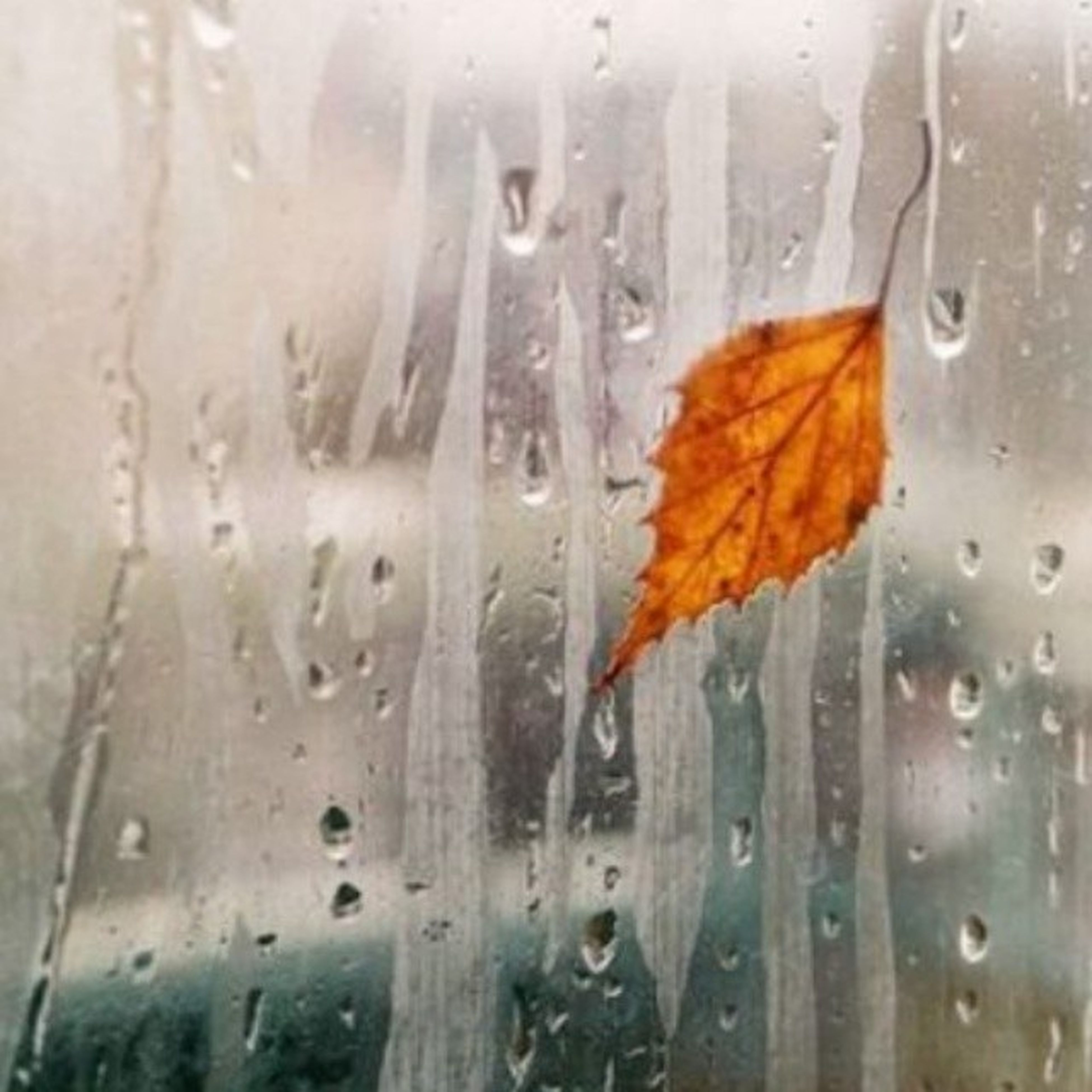 drop, wet, window, rain, season, glass - material, transparent, weather, water, full frame, backgrounds, indoors, raindrop, close-up, glass, monsoon, focus on foreground, condensation, rainy season, droplet