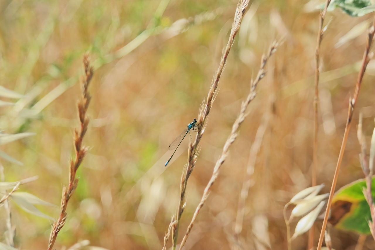Light Blue Damselfly. Beauty In Nature BlueInsects Damselfly Insect Nature Outdoors