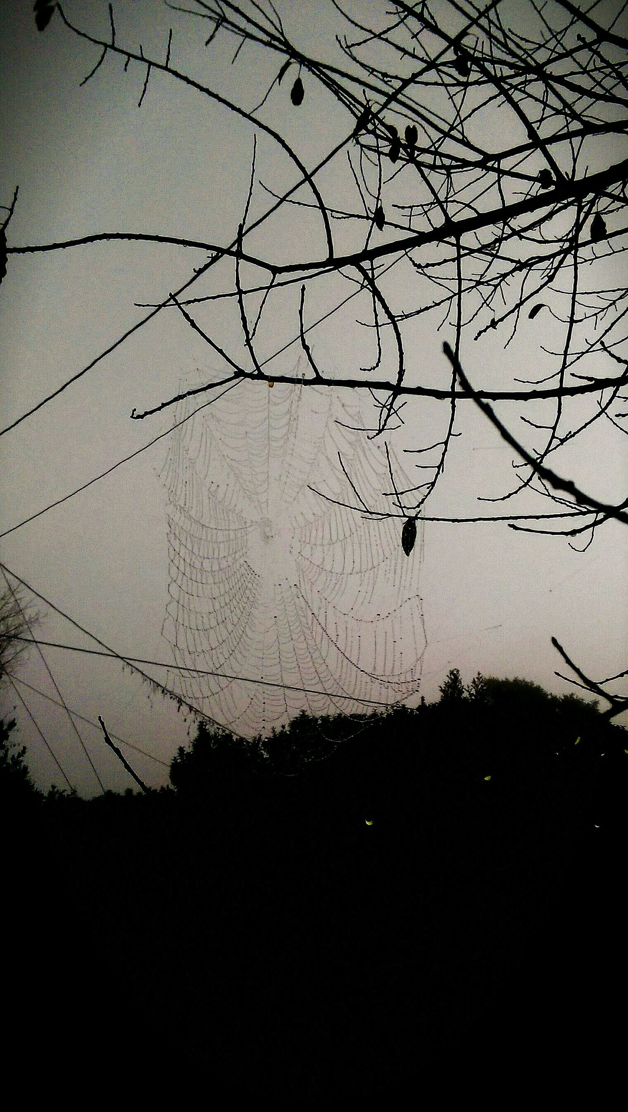 Dawn Of A New Day Nature Outdoors Beauty In Nature Florida Skies Dreary Can Be Beautiful Cobwebs, Cobweb Cobwebnatuee Spider Web Spiderworld Spiderweb Spider Nature_collection Eyenaturelover Spiders Web Spider Spiders Spider Webs Spiderwebs