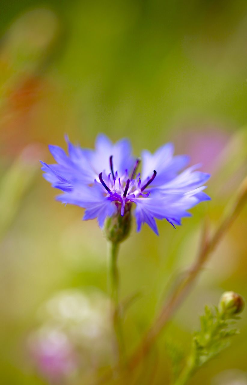 flower, nature, growth, petal, plant, beauty in nature, fragility, flower head, freshness, no people, close-up, blooming, outdoors, day
