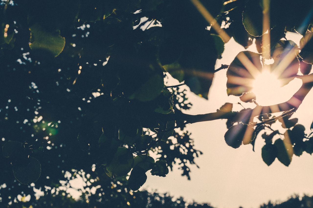 growth, leaf, plant, no people, nature, tree, beauty in nature, close-up, flower, outdoors, day, branch, fragility, freshness