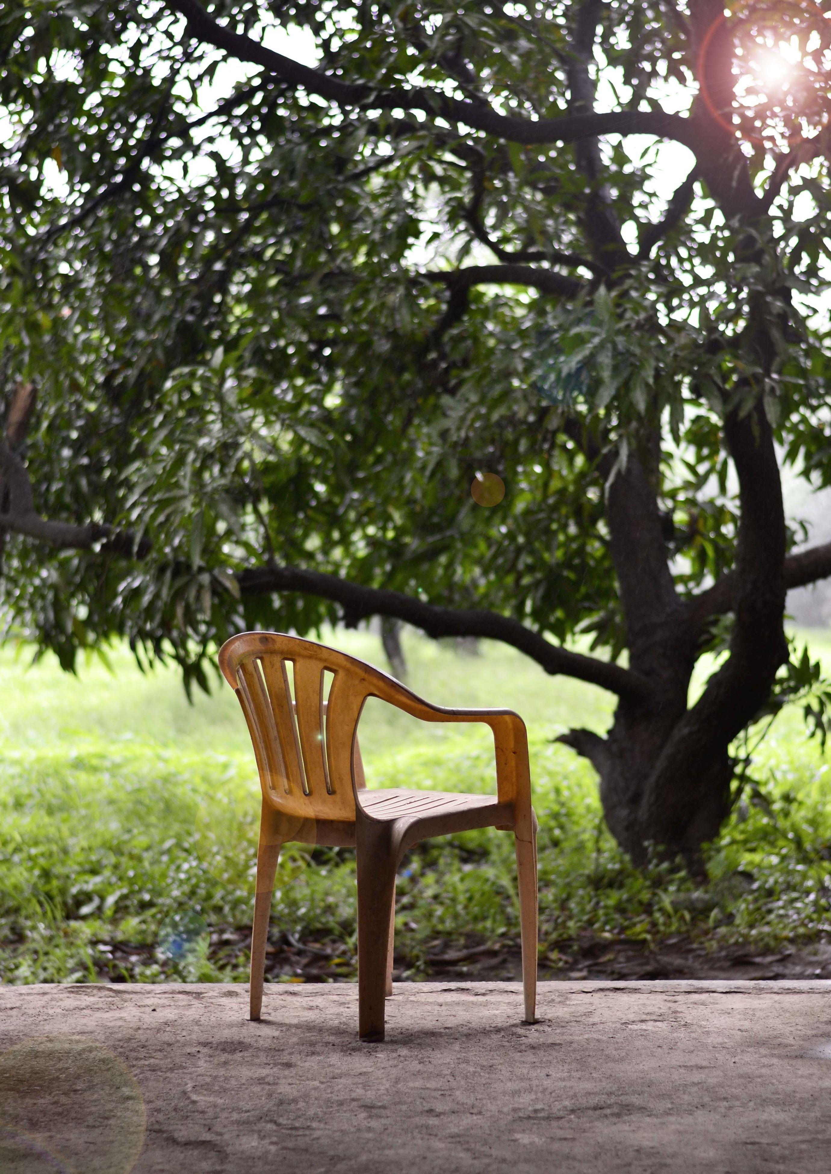 tree, bench, absence, chair, growth, park - man made space, empty, branch, built structure, tranquility, sunlight, seat, tree trunk, nature, day, no people, outdoors, park bench, architecture, green color