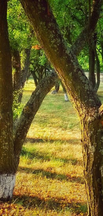 My Best Photo 2015 Light And Shadow Nature Lendscape Hello World The Trees Fall Colors