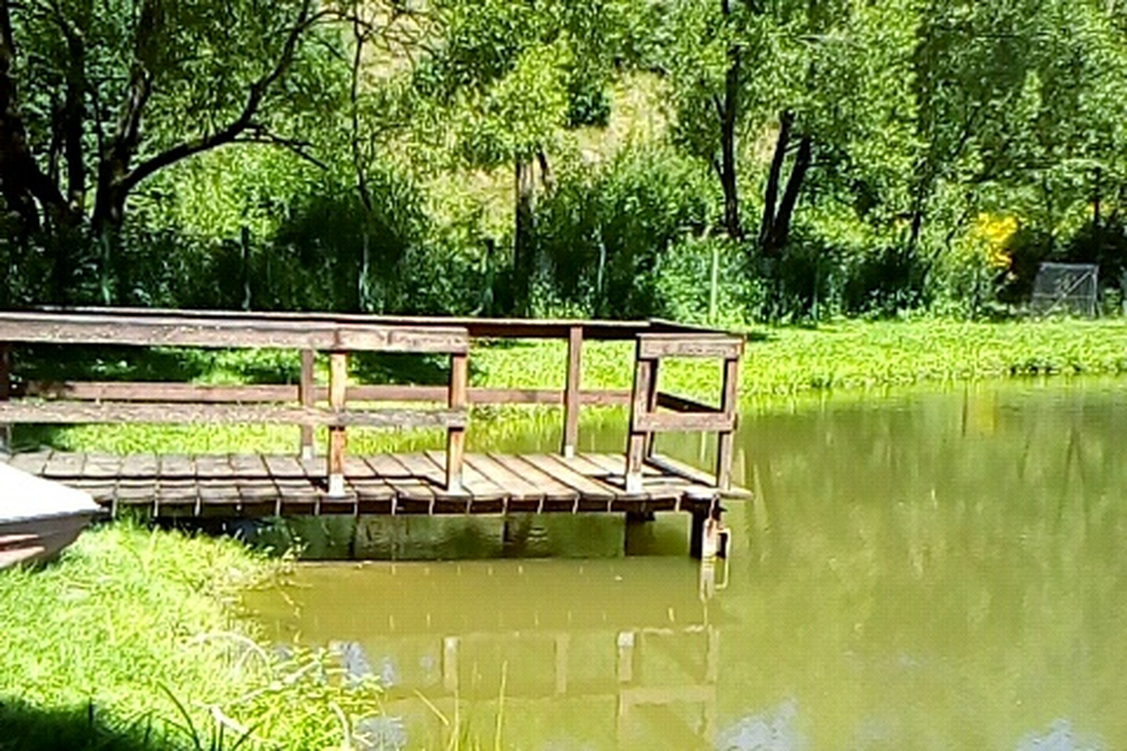 water, tree, waterfront, reflection, tranquility, tranquil scene, lake, pier, scenics, connection, nature, bridge - man made structure, footbridge, beauty in nature, growth, standing water, calm, green color, day, green, outdoors, non-urban scene, majestic, no people, park
