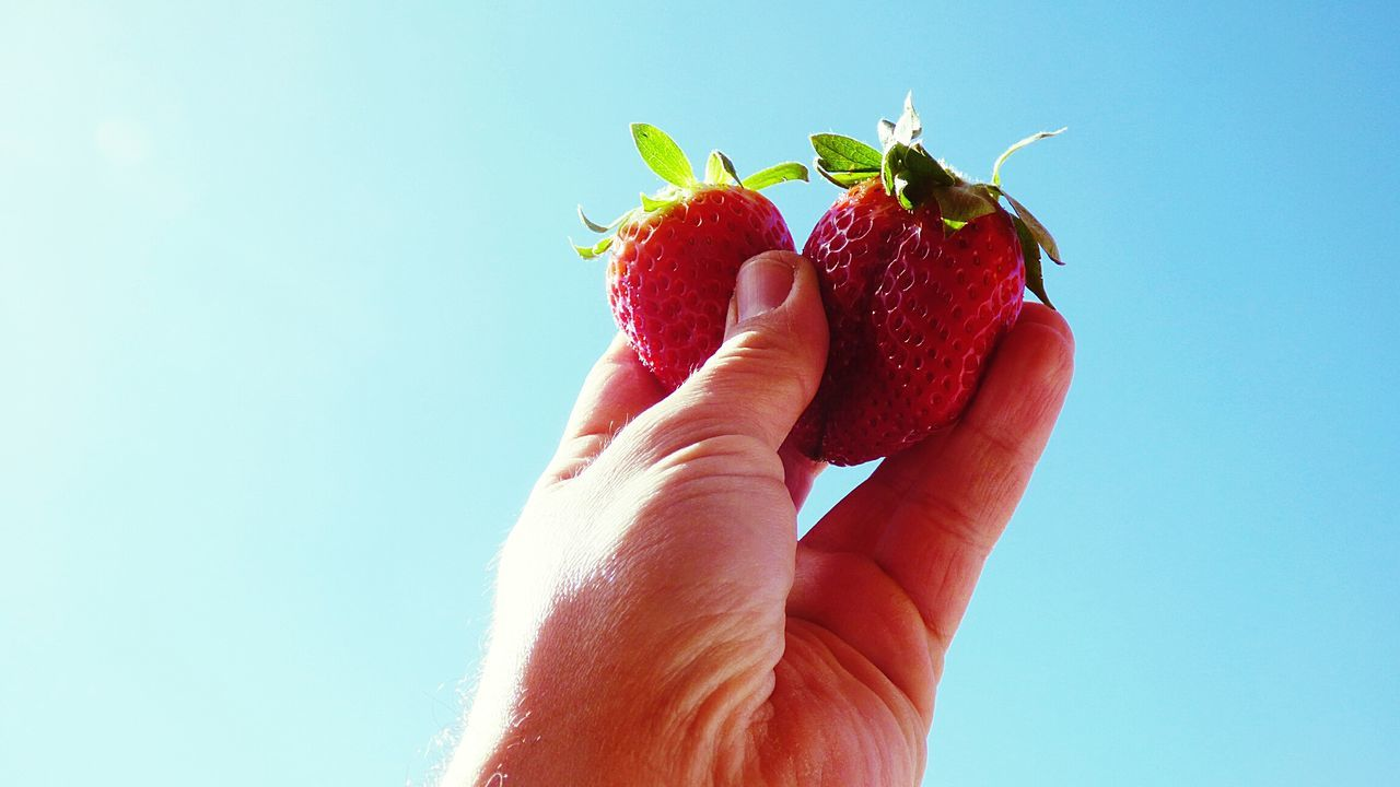 Showcase March My Hand Holding 2 Strawberries i love this Fruits and is Healthy Food and a great Antioxidants Red Strawberry Blue Background Green Food Fruit Close Up My Hand