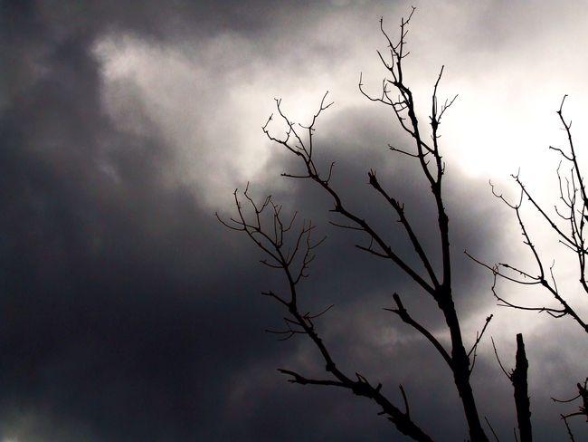Angry Tree Dead Plant Dead Tree Rainy Days Nuvoloni Nuvoloso Uggioso Minaccioso Albero Secco Rabbia Artistic Blackandwhite Biancoenero Desolate Death