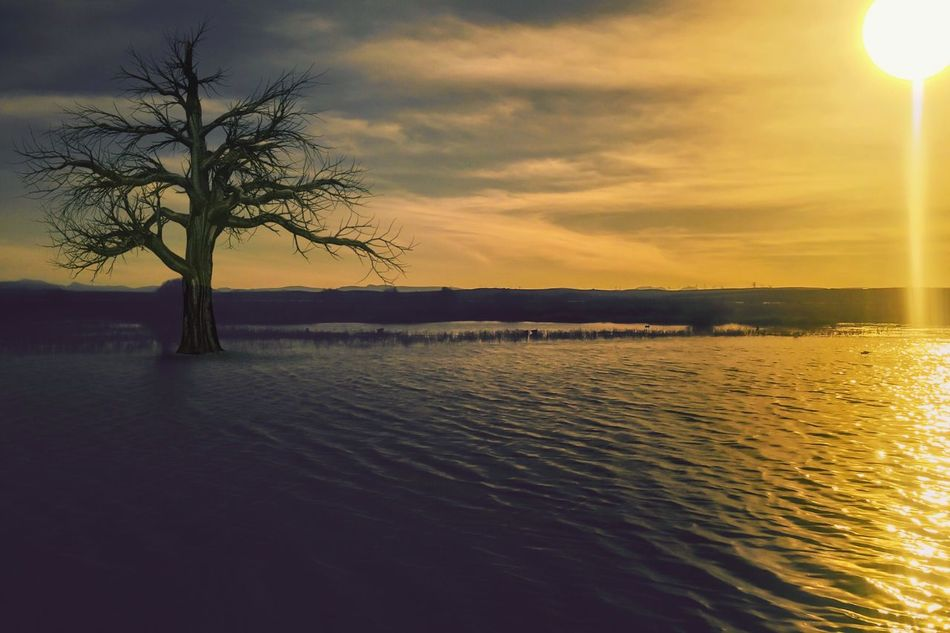 Rule Of Thirds Horizon Over Water Lake View Twilight Sky Water Water Reflections Light And Shadow Rainy Days Respect For The Good Taste IPhoneography EyeEm Best Shots Let's Do It Chic! Exceptional Photographs Nature Sky Beauty In Nature Sunset Tree Bare Tree No People Tranquility Outdoors Lone Day