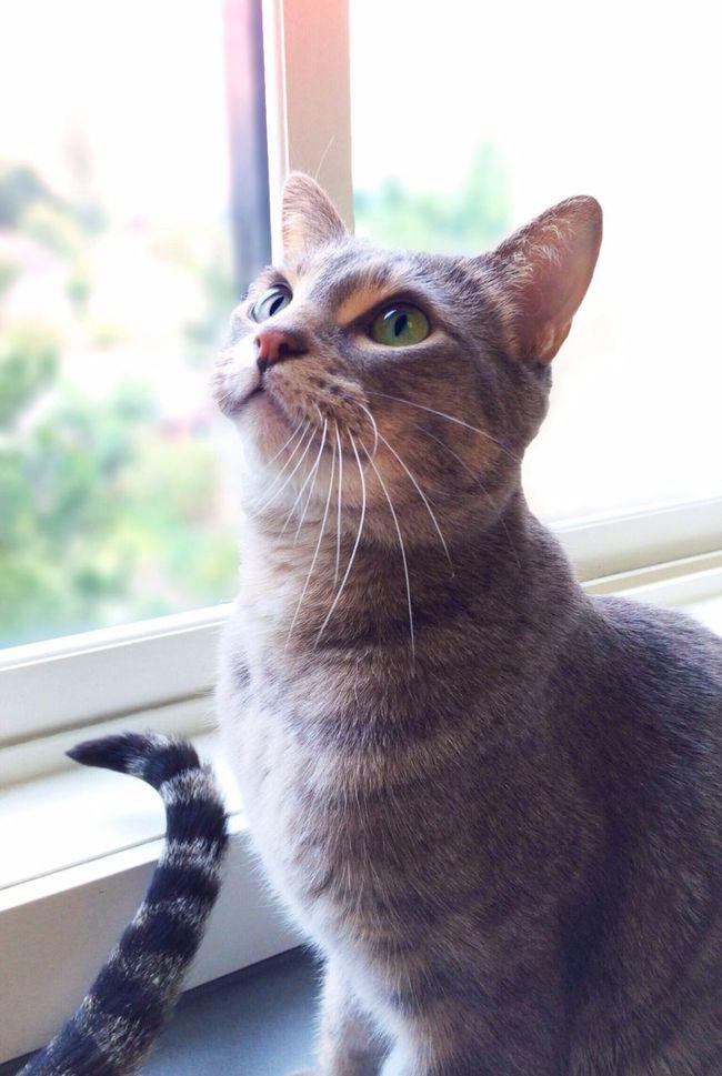 Good Morning, EyeEm. ?? Mel&BomBi Cat Cute Pets Tadaa Community