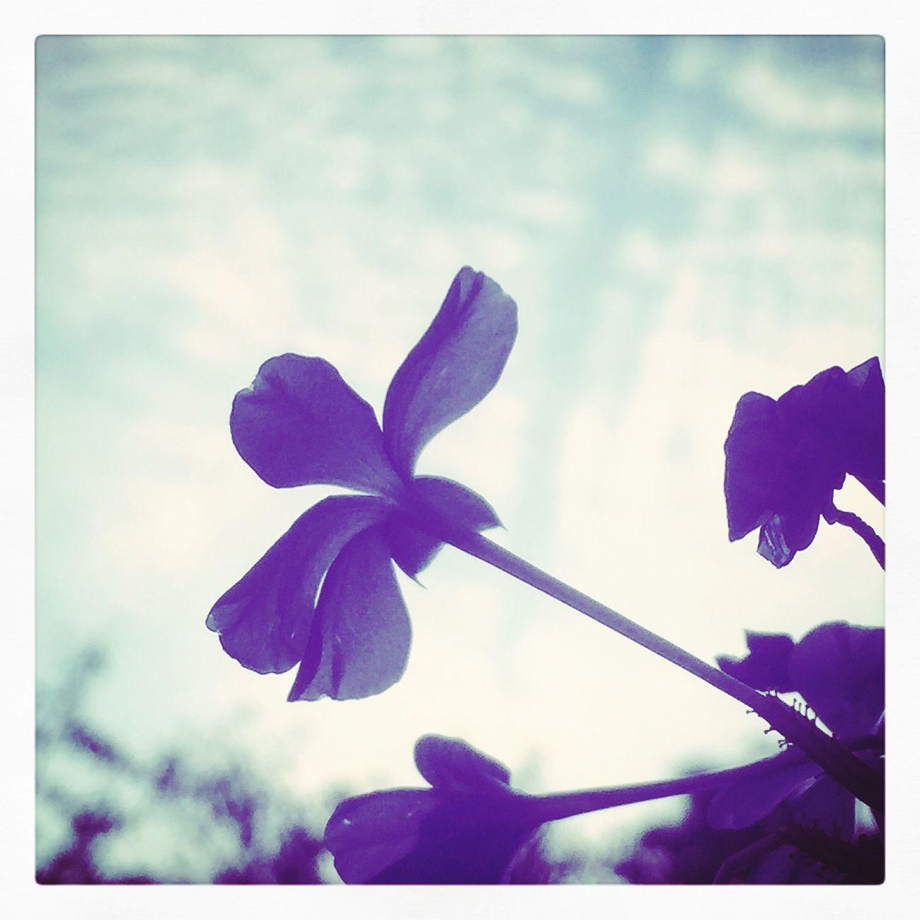 心はいつもそばに…。 Flower Nature Beauty In Nature Petal Sky Flower Head Day Flower Collection Eye Em Nature Lover EyeEm Best Shots Fragility Plant Freshness Growth Close-up No People Outdoors (null)Blue Flowers Sea2sky Love ♥