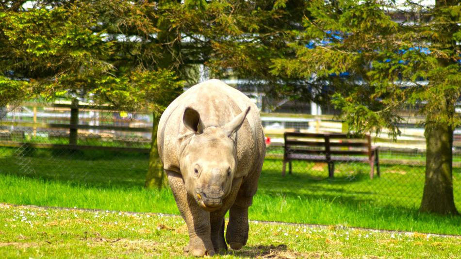 Rhino Rhinoceros Baby Rhino Baby One Horned Rhinoceros One Horned Rhino Nature Nature Photography Naturelovers