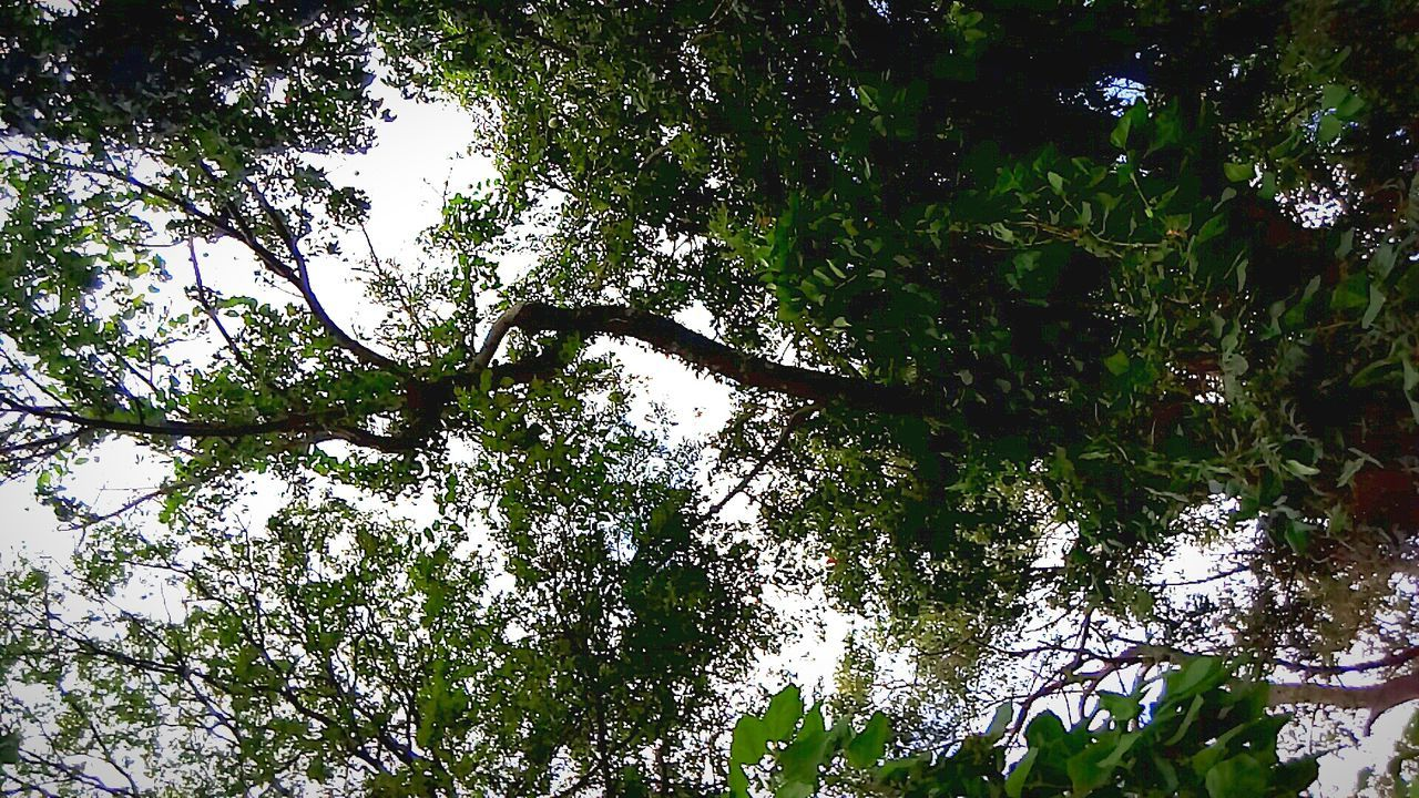 tree, growth, low angle view, nature, branch, outdoors, beauty in nature, day, no people, forest, green color, sky