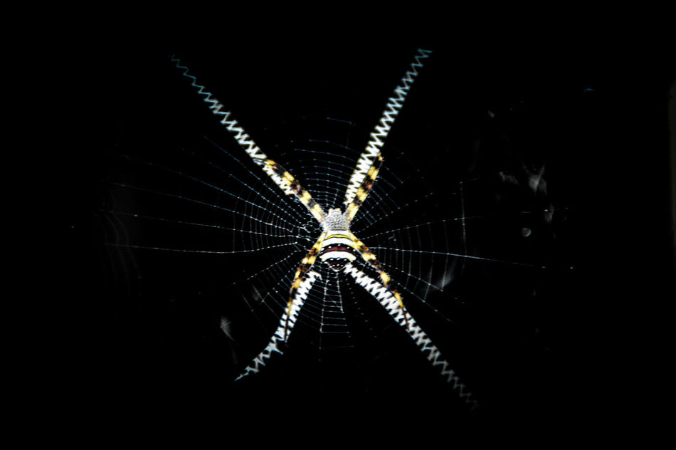 Black Background No People Night Illuminated Close-up Outdoors Spider Web, Dew, Morning, Spider Web Spider Web In The Air Insect Copy Space Lines, Shapes And Curves Welcome To Black