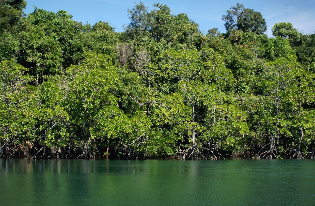 River Boat Mangrove Mangrove Forest Mangroves Tree Nature Green Color Beauty In Nature Water Scenics Outdoors No People Tranquil Scene Growth Lake Forest Day Tranquility Waterfront Plant Landscape Sky Canonphotography in Cambodia